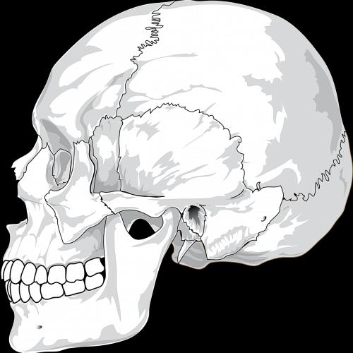 Bild zum Weblog Knochenarbeit!