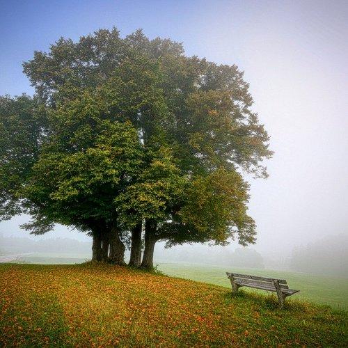 Bild zum Weblog Das Wunderwerk Baum