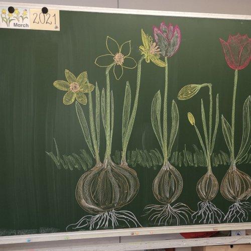 Bild zum Weblog Frühlingserwachen