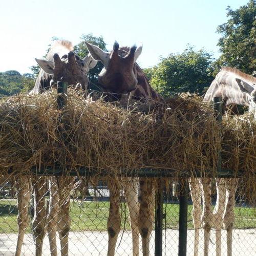 Bild zum Weblog Ein Ausflug in den Zoo