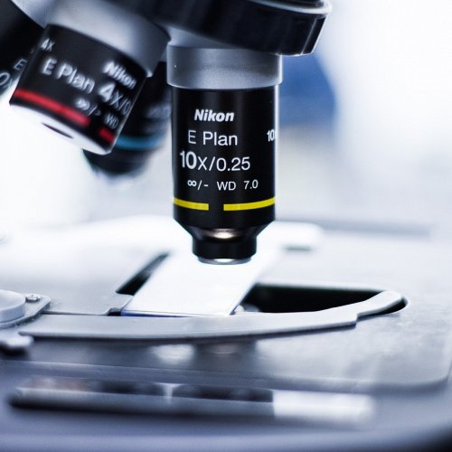 Bild zum Weblog Mikroskopieren