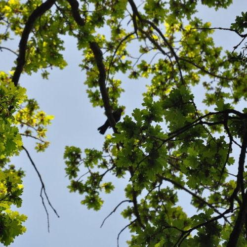 Bild zum Weblog Waldführung