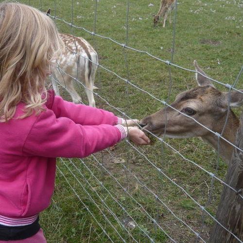 Bild zum Weblog Familienwandertag im Lainzer Tiergarten